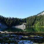 Wenatchee National Forest Cannabis