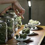 Wenatchee Retail Marijuana Store